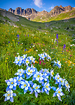San Juan Mountains, CO<br /> American Basin with Colorado columbine(Aquilegia coerulea) and wildflower meadows beneath Handies Peak