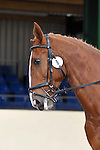 07/06/2015 - Class 3 - Unaffiliated Dressage - Brook Farm Training Centre