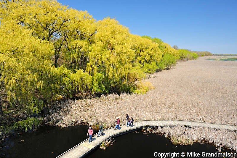 bird watchers on wooden boardwalk trail looking for brds during the spring migration <br />Point Pelee National Park<br />Ontario<br />Canada