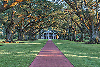 Late afternoon at Oak Alley plantation. The sun is filtering through theses 300 year old trees on the plantation and the path to the mansion as it goes down.  The house was positioned to enhance the trees presence on the plantation and they seem to create this wonderful canopy over the house and sidewalk area. No one knows who planted these oaks trees but they seem to know exacty where they thought the house should be place because they seem to have are perfect path to the Mississippi.  This was a working sugar plantation which was manned by slavery as was the case during this era in the deep south.  The slave live on the property on the other side in their own housing area while their home may have mulitple familes living under the same roof in crowed miserable conditions.  The historical property is beaufiful today and has been well maintained and these oak are what drew us there. These are big and beautiful live oak trees on very nice grounds some refer to this area as oak valley or seven oaks.   This part of the community of  Vacherie St James Parish in Louisiana located on the west bank of the Mississippi River. The property was purchase by Varlcour Aimes in 1830 but exchanged with Jacques Roman and he started building the mansion the following year the style of the house is Greek Revival with his father in law Joseph Pilie as his architect. Later on the property was sold several time and finaly ended up in the hands of Josphine Stewart as a gift from her husband.  She started extensive restoration of the old mansion which had fallen into disrepare over the years but ended up not being able afford the cost to keep it up. Josephine Stewart ended up leaving it to the Oak Alley Foundation in 1972 which open it to the public.l  Oak Alley Plantation is like a world frozen in time with it history dating back to the mid 1800's. Oak Alley became a National Historic Landmark. On BCP site already.