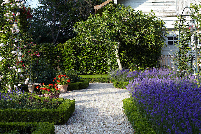Beds filled with lavender and framed with box line a gravel path in the garden