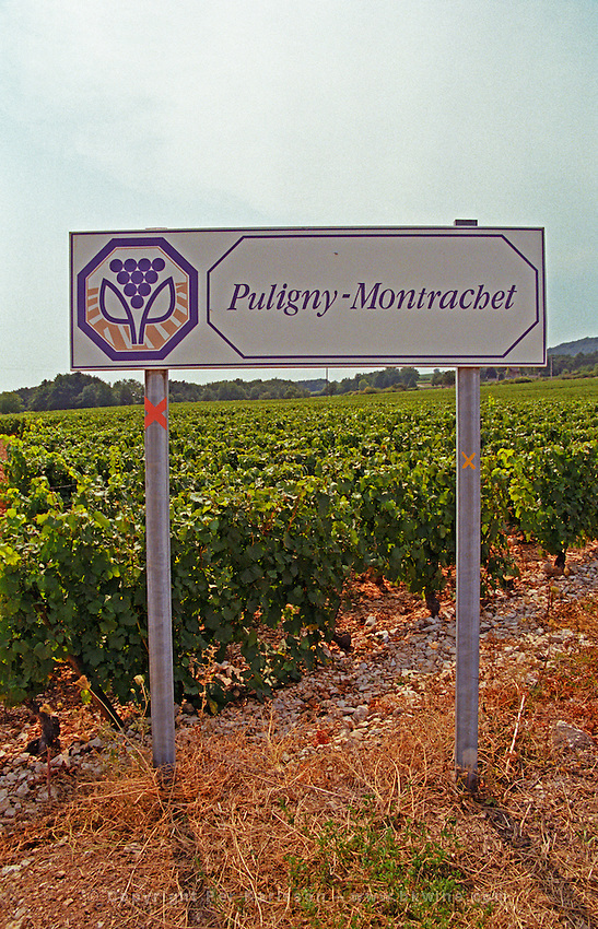 A sign indicating Puligny-Montrachet vineyards