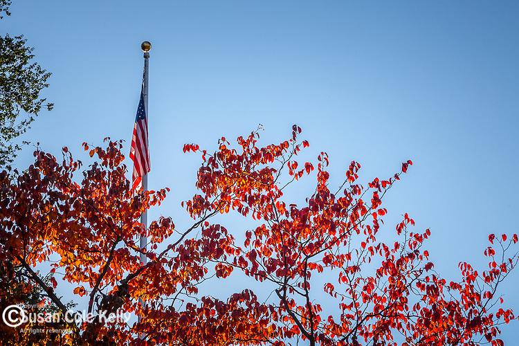 Fall foliage in Boston Common, Boston, Massachusetts, USA