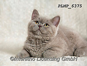 Marek, ANIMALS, REALISTISCHE TIERE, ANIMALES REALISTICOS, cats, photos+++++,PLMP6375,#a#, EVERYDAY