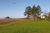 View over the vineyard, the garden, the house and a big bird. Bodega Juanico Familia Deicas Winery, Juanico, Canelones, Uruguay, South America