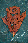 Fall weather with wilting leaf on rock