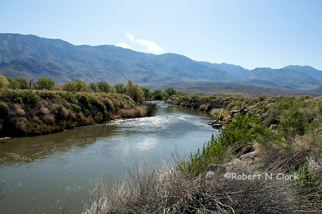 Rewatered section of the lower Owens River