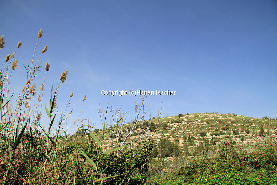 Israel, Jerusalem mountains, Tel Ksalon at the Martyrs forest