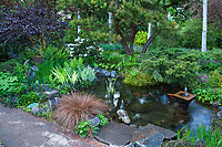 Garden pond with bog plants by patio ; O'Byrne Garden