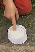 Kinder gießen Tierspur aus Gips, Junge prüft Festigkeit vom Gips im Ring aus Karton über dem Trittsiegel, der Fußspur von einem Reh