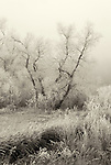 Icy Field and Woodland #1.  From the Palmer Divide Series.  Sepia Toned.