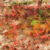 Fall leaf color, texture and shapes.