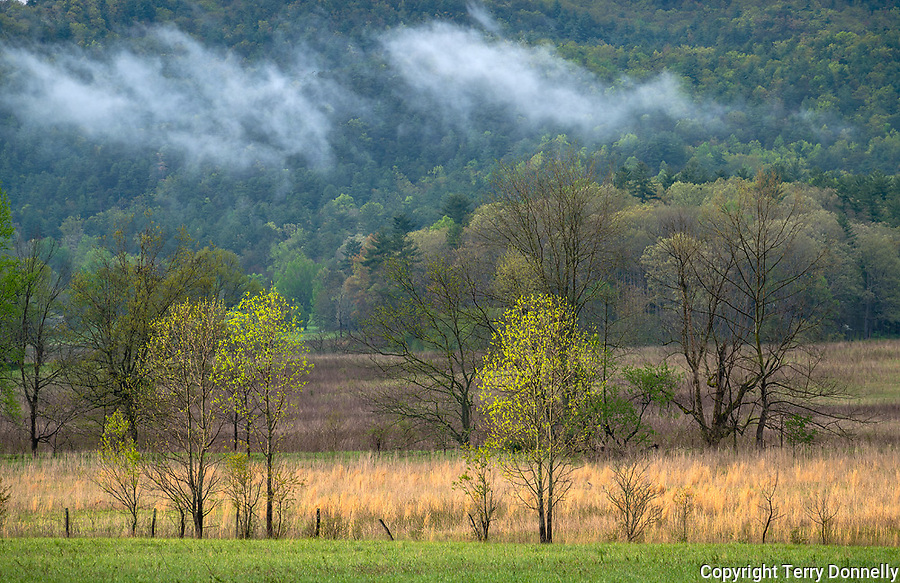 Great Smoky Mountains National Park, Tennessee:<br /> Evening rain clouds linger in  Cades Cove, early spring