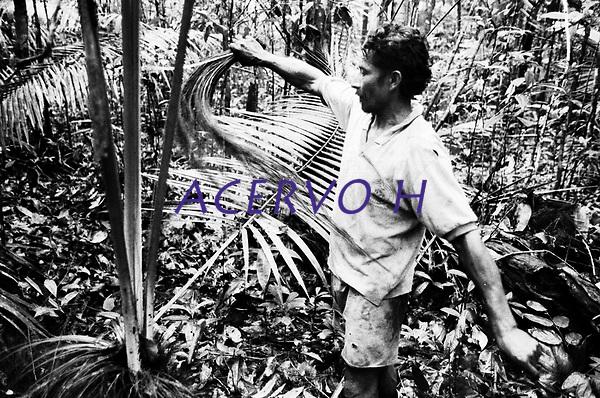 &Iacute;ndio Werekena, morador da comunidade de Anamoim no alto rio Xi&eacute;, alisa as fibras da &aacute;rvore de pia&ccedil;aba (Leopold&iacute;nia p&iacute;assaba Wall),antes de cort&aacute;-la. A  &aacute;rvore que normalmente aloja os mais variados tipos de insetos representando um grande risco aos &iacute;ndios durante sua coleta . A fibra  um dos principais produtos geradores de renda na regi&atilde;o &eacute;  coletada de forma rudimentar. At&eacute; hoje &eacute; utilizada na fabrica&ccedil;&atilde;o de cordas para embarca&ccedil;&otilde;es, chap&eacute;us, artesanato e principalmente vassouras, que s&atilde;o vendidas em v&aacute;rias regi&otilde;es do pa&iacute;s.<br />Alto rio Xi&eacute;, fronteira do Brasil com a Col&ocirc;mbia a cerca de 1.000Km oeste de Manaus.<br />06/06/2002.<br />Foto: Paulo Santos/Interfoto Expedi&ccedil;&atilde;o Werekena do Xi&eacute;<br /> <br /> Os &iacute;ndios Bar&eacute; e Werekena (ou Warekena) vivem principalmente ao longo do Rio Xi&eacute; e alto curso do Rio Negro, para onde grande parte deles migrou compulsoriamente em raz&atilde;o do contato com os n&atilde;o-&iacute;ndios, cuja hist&oacute;ria foi marcada pela viol&ecirc;ncia e a explora&ccedil;&atilde;o do trabalho extrativista. Oriundos da fam&iacute;lia ling&uuml;&iacute;stica aruak, hoje falam uma l&iacute;ngua franca, o nheengatu, difundida pelos carmelitas no per&iacute;odo colonial. Integram a &aacute;rea cultural conhecida como Noroeste Amaz&ocirc;nico. (ISA)