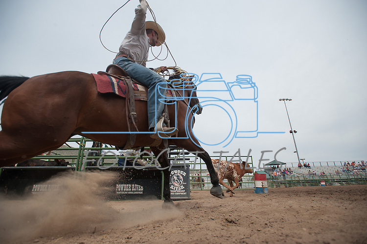 A competitor chases after a calf in the Calf Roping event at the Minden Ranch Rodeo Buckaroo Fest during the NV150 Fair at Fuji Park in Carson City, Nev., on Sinday, August 3, 2014.<br /> (Photo By Kevin Clifford)