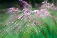 Mountain grass in motion through slow shutter and zoom.
