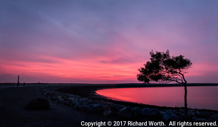 Sunset fills the sky and reflects in the water  behind the wind bent tree in a multiple image panoramic at the San Leandro Marina on San Francisco Bay.
