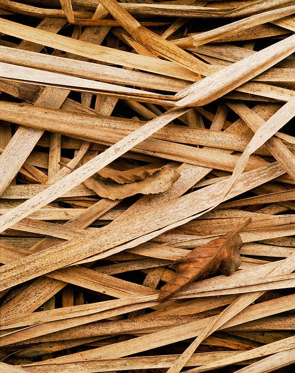 Cattail reeds, Yosemite Valley, Yosemite National Park, California  1989