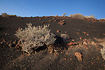 Volcanic landscape in the south of Canary Island of El Hierro. 30/01/2012