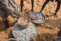 Togo - Aneho - The catch of the day of several fishermen after several hours spent pulling the net. Fishermen are struggling to feed their families as rising sea temperatures have prompted fish stock to move further away from the coasts. Many youngsters are therefore abandoning their villages in search of better opportunities.