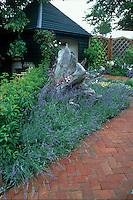 English lavender Lavandula angustifolia surrounding rustic wooden tree trunk next to brick pathway, gazebo, pretty backyard garden