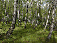 FOREST_LOCATION_90020