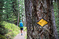 Hiking past a trail marker on a tree in the forest above Zermatt, Switzerland.