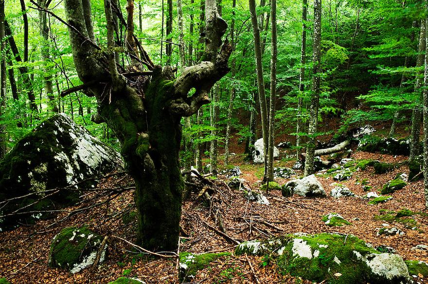 pristine forest at river Moznica, Moznica valley<br /> Triglav National Park, Slovenia<br /> July 2009