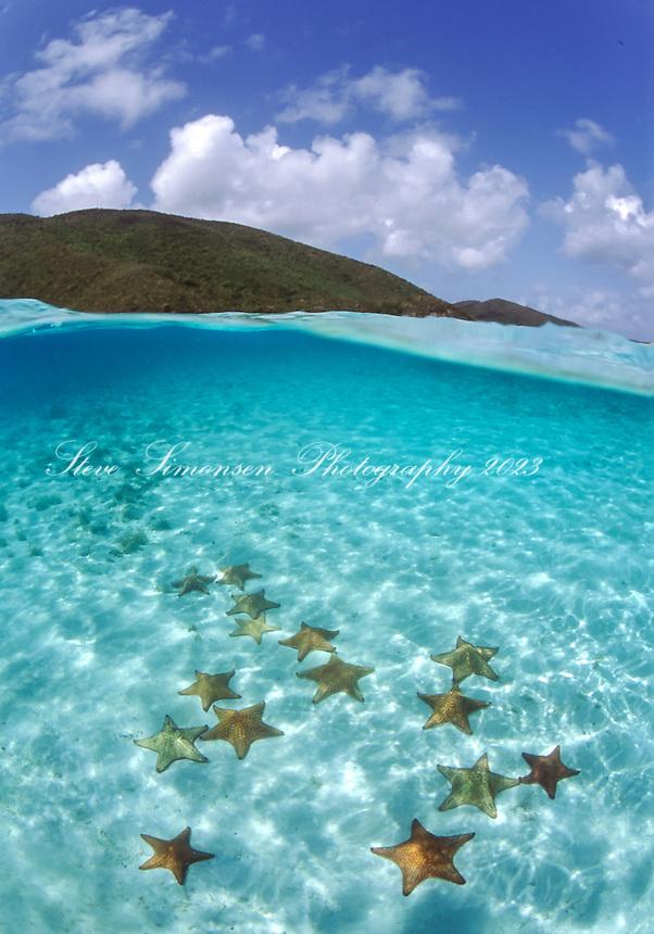 Split Level Starfish<br /> Leinster Bay<br /> Virgin Islands National Park<br /> St. John<br /> US Virgin Islands