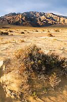 Devils Cornfield and Tucki Mountain of the Panamint Range, Death Valley National Park, California