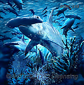 Steven-Michael, REALISTIC ANIMALS, REALISTISCHE TIERE, ANIMALES REALISTICOS, paintings+++++,USMG108,#a#, EVERYDAY ,puzzles,maritime,underwater,sharks