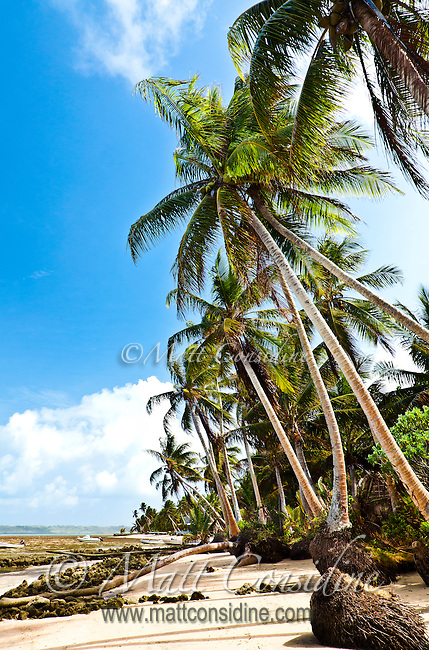 Tropical beach scene with a line of coconut palms. (Photo by Matt Considine - Images of Asia Collection)