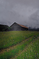 Cow shelter and spring meadows, Imst district, Tyrol/Tirol, Austria, Alps.