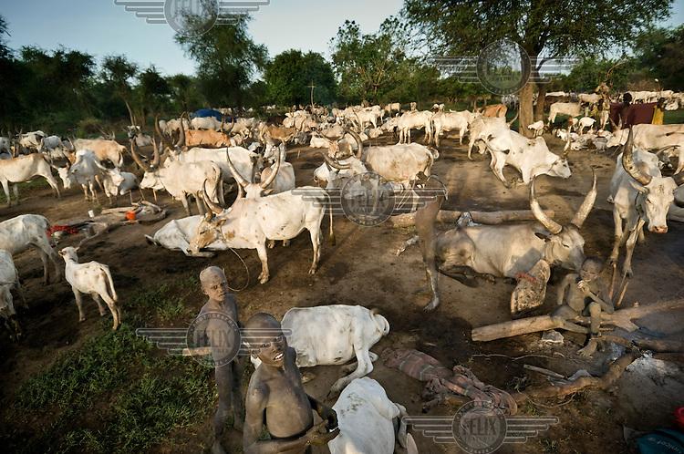 Children at a cattle camp near Tali village. Central Equatoria, South Sudan.