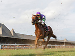 First time by as Mighty Scarlett (no. 8) wins the Race 9, Sep. 2, 2018 at the Saratoga Race Course, Saratoga Springs, NY.  Ridden by Jose Ortiz, and trained by Chad Brown, Mighty Scarlett finished 1 3/4 lengths in front of Too Cool to Dance (No. 3).   (Bruce Dudek/Eclipse Sportswire)