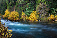 Metolius River with colorful warter and fall color. Oregon