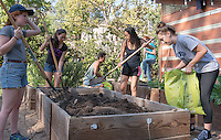 Photo from the F.E.A.S.T (Food Energy and Sustainability Team) student-run organic garden at UEPI, Oct. 3, 2015.<br /> (Photo by Marc Campos, Occidental College Photographer)