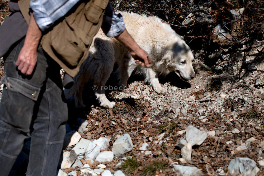 Max George shows his dog where to search for truffles, Puget-Theniers, France, 09 February 2011.  Truffle hunters look for tell-tale visual signs in the countryside that indicate the possible presence of truffles, and encourage their trained dogs to seek thoroughly in those places.