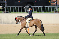 Pony over 13 NE 13.2HH