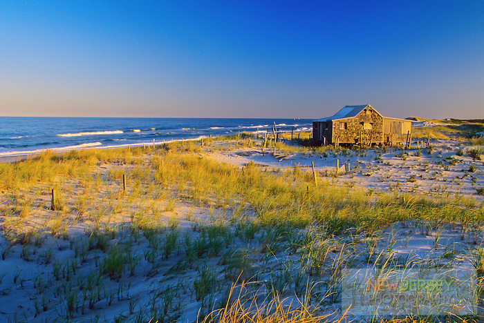 Coastal Sand Dunes & cottage, Island Beach, New Jersey