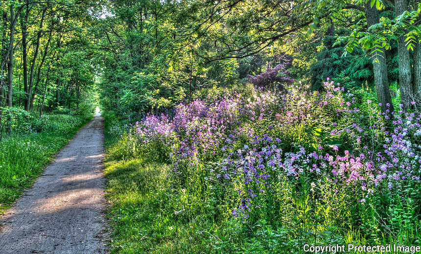Wildflowers (phlox ) along the Howard Watson Trail