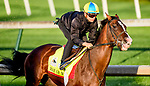 LOUISVILLE, KENTUCKY - APRIL 27: War of Will, trained by Mark Casse, exercises in preparation for the Kentucky Derby at Churchill Downs in Louisville, Kentucky on April 27, 2019. John Voorhees/Eclipse Sportswire/CSM