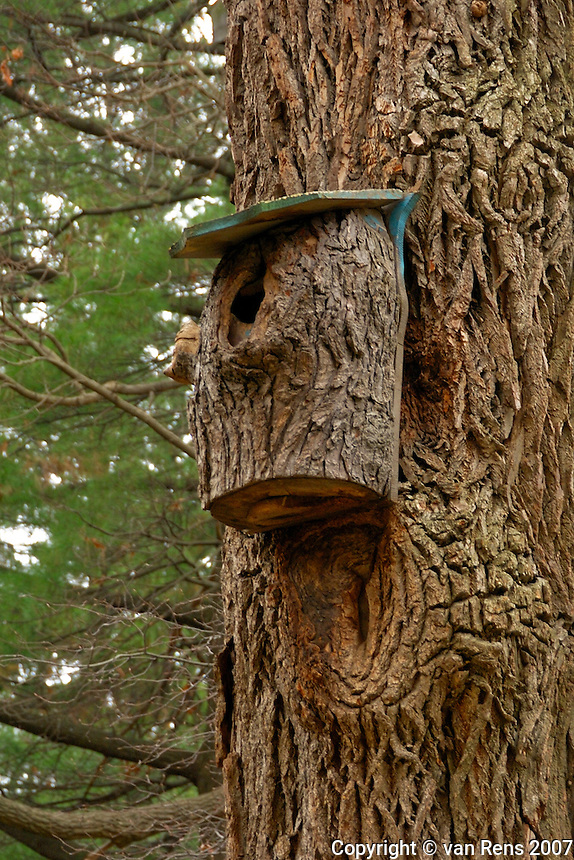 Is this the best bird house ever?