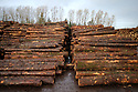 TO GO WITH STORY BY Arthur Beesley. DATE 8 FEB 2018. The Log yard of Balcas, Balcas Timber Ltd,  Laragh, Ballinamallard, Enniskillen Co. Fermanagh, Northern Ireland. Photo/Paul McErlane