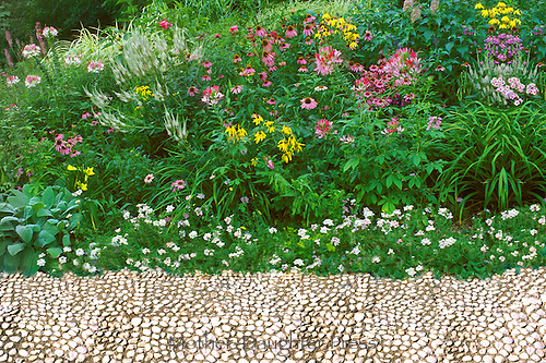 Pebbled path with coneflowers