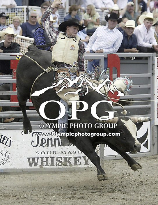 29 August 2004: Bull Rider Jesse Belyea rides the bull during the PRCA 2004 Extreme Bulls competition in Bremerton, WA.