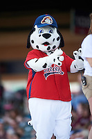 Peoria Chiefs mascot Homer during a game against the Dayton Dragons on May 6, 2016 at Dozer Park in Peoria, Illinois.  Peoria defeated Dayton 5-0.  (Mike Janes/Four Seam Images)