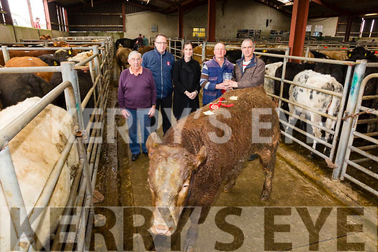 The prize for Best Yearling Bull at the Iveragh Mart on Tuesday went to Jeremiah Moran from Direen, Cahersiveen pictured here l-r; Jack Walsh(Sponsor South Kerry Cabs), Austin Constable(AIB), Cathriona Pyne(AIB), Jeremiah Moran & Nially O'Shea Chairman Iveragh Mart.  A Limousine Bull, Lot 527, weighing 460kg born July 2016 and sold for €1170.