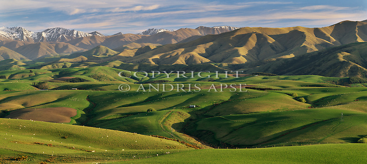 Rolling green farmland near Fairlie. Canterbury Region. New Zealand.