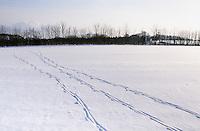 Reh, Rehwild, Spur, Trittsiegel, Fußabdruck, Fährte im Schnee, Capreolus capreolus, Roe deer, Chevreuil